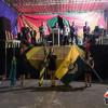 Celebrações marcam o Dia do Evangélico em Alegrete do Piauí; veja as imagens!