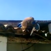 Armado com uma peixeira, macaco bêbado ameaça clientes de bar na PB; veja vídeo!