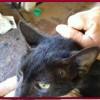 Gato é ferido por bala que fica alojada no seu corpo no interior do Piauí