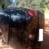 Carro capota e bate em árvore após condutor perder o controle no Piauí