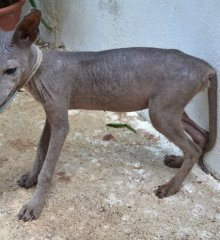 Animal estranho chegou a ser   capturado em PIO IX