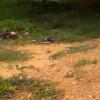 Polícia encontra corpos de três caçadores em uma semana no Sul do Piauí