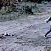 Imagens mostram homem atirando celulares para detentos em presídio do Piauí