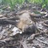 Zoonozes passa a investigar caso de macaco encontrado morto em Teresina