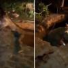 Cavalo  cai  em buraco durante chuva em Teresina