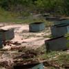 MONSENHOR HIPÓLITO  Cooperativa pede punição após apicultor ter prejuízo de R$ 12 mil com envenenamento de colmeias