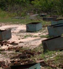MONSENHOR HIPÓLITO| Cooperativa pede punição após apicultor ter prejuízo de R$ 12 mil com envenenamento de colmeias