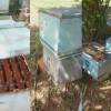Apicultor tem apiário envenenado em Monsenhor Hipólito