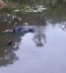 Corpo de homem é encontrado boiando em rio no município de Monsenhor Hipólito