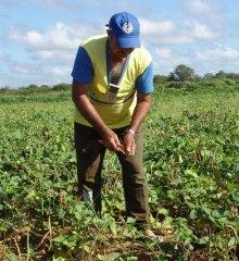 70 mil agricultores vão receber Seguro Safra após Governo do Piauí liberar R$ 7,2 milhões para pagamento